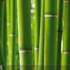 Ag Design Fleece Kuvatapetti Bamboo 360x270 Cm