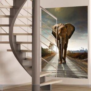 Ag Design Fleece Kuvatapetti Elephant 180x202 Cm