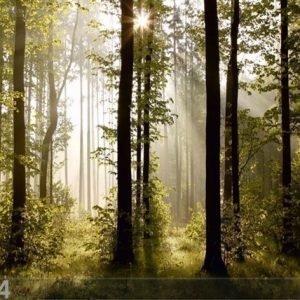 Ag Design Fleece Kuvatapetti Forest 3 360x270 Cm