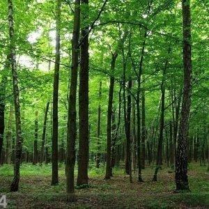 Ag Design Fleece Kuvatapetti Forest 360x270 Cm