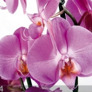 Ag Design Fleece Kuvatapetti Orchids 2