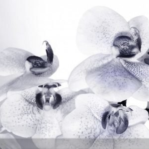Ag Design Fleece Kuvatapetti Orchids 3 360x270 Cm