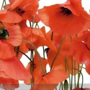 Ag Design Fleece Kuvatapetti Poppies 360x270 Cm