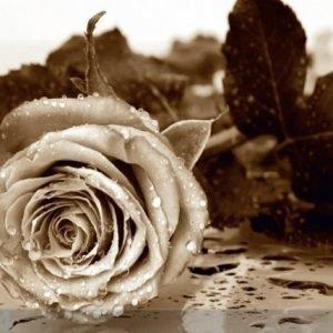 Ag Design Fleece Kuvatapetti Roses 360x270 Cm