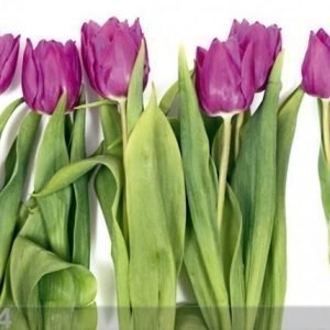 Ag Design Fleece Kuvatapetti Tulips 2 360x270 Cm