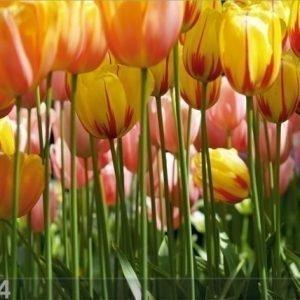 Ag Design Fleece Kuvatapetti Tulips 360x270 Cm