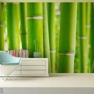 Ag Design Kuvatapetti Bambus 360x254 Cm