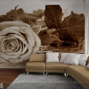 Ag Design Kuvatapetti Black And White Rose 360x254 Cm