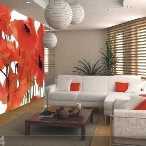 Ag Design Kuvatapetti Poppy 360x254 Cm