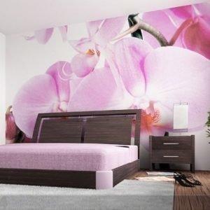 Ag Design Kuvatapetti Purple Orchid 360x254 Cm
