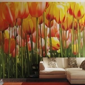 Ag Design Kuvatapetti Tulips 360x254 Cm