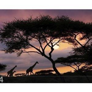Bilder-Welten Kuvatapetti African Safari 400x280cm
