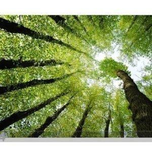 Bilder-Welten Kuvatapetti Forest Dreams 400x280cm