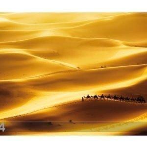 Bilder-Welten Kuvatapetti Golden Dunes 400x280cm