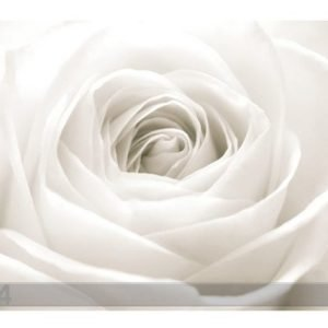 Bilder-Welten Kuvatapetti The White Rose 400x280 Cm