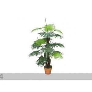 Da Palmu 120 Cm