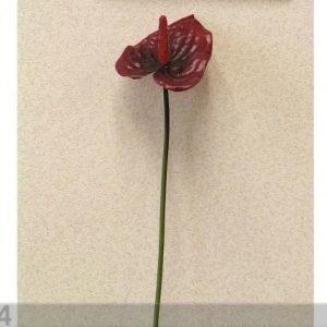 Decoland Anthurium