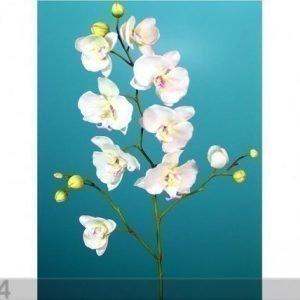 Decoland Orkidea Phalaenopsis