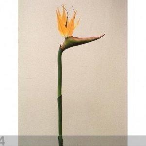 Decoland Paratiisilintu Kukka