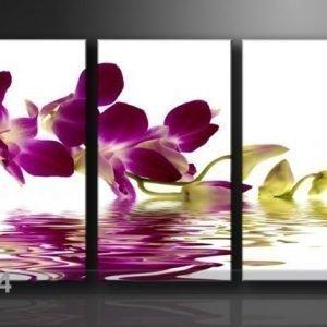 Ed Kolmeosainen Seinätaulu Orkidea