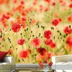 Ed Kuvatapetti Dream Of Poppies 400x280 Cm