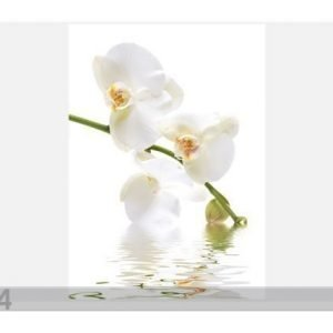 Ed Kuvatapetti Orchid Waters 200x280 Cm