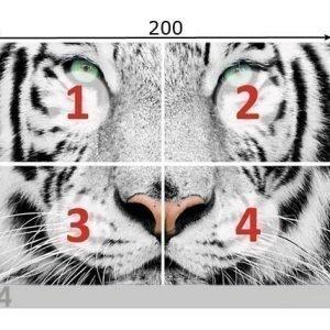 Ed Kuvatapetti White Tiger 280x200 Cm