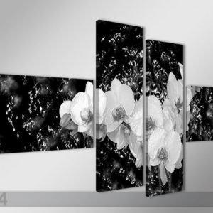 Ed Neljäosainen Seinätaulu Orkidea VedessÄ