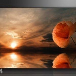 Ed Seinätaulu Moon 120x80 Cm