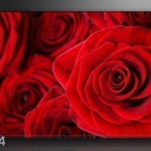 Ed Seinätaulu Ruusut 120x80 Cm