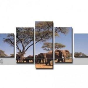 Ed Viisiosainen Seinätaulu Elefantti