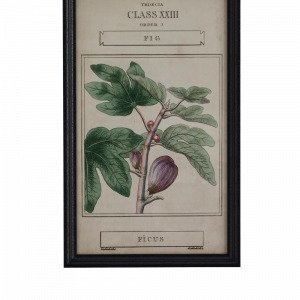 Ellos Botany Taulu Vihreä 40x65 Cm