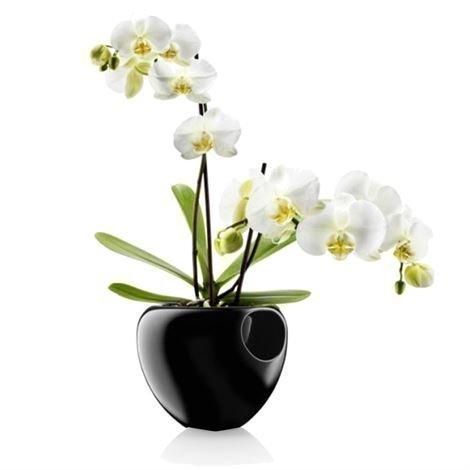 Eva Solo Orkidearuukku Musta