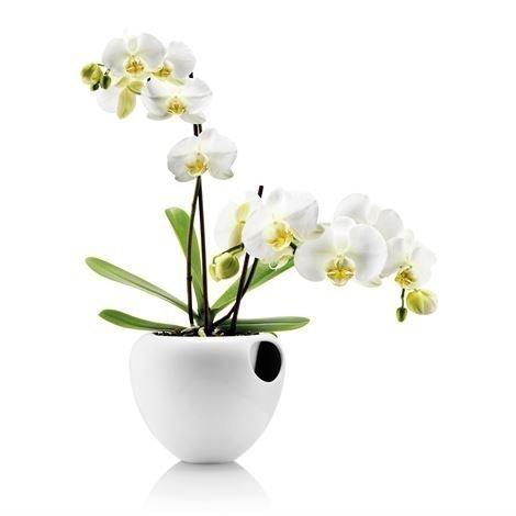 Eva Solo Orkidearuukku Valkoinen