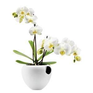 Eva Solo Orkidearuukku Valkoninen