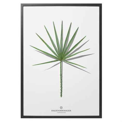 Hagedornhagen Folium Juliste Folium 4 Palmu