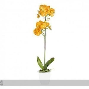 Home4you Koristekasvi Keltainen Orkidea 72 Cm