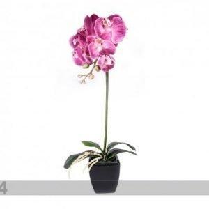 Home4you Koristekasvi Roosa Orkidea 72 Cm