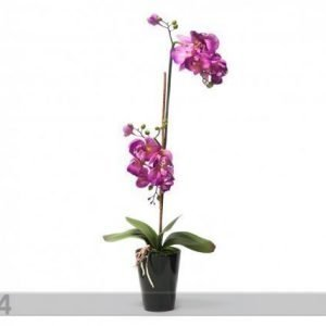 Home4you Koristekasvi Vaaleanpunainen Orkidea 72 Cm