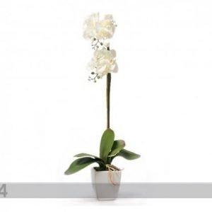 Home4you Koristekasvi Valkoinen Orkidea 75 Cm