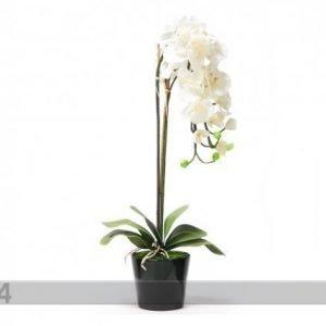 Home4you Koristekasvi Valkoinen Orkidea 88 Cm