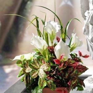 Igea Kukka Asetelma Valkoinen
