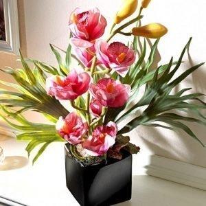 Igea Orkidea Asetelma Roosa