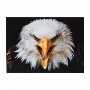 Jotex Eagle Juliste Valkoinen 70x50 Cm