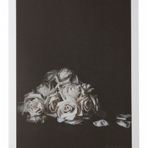 Jotex Faded Roses Juliste Roosa 50x70 Cm