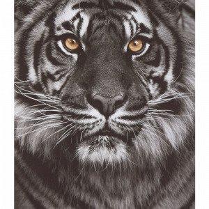Jotex Katten Juliste Musta 50x70 Cm
