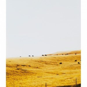 Jotex Pasture Juliste Keltainen 50x70 Cm