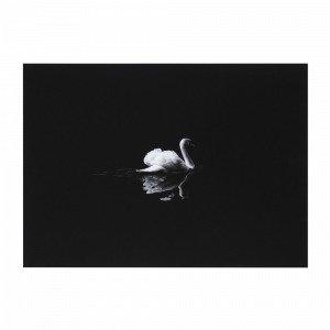 Jotex Swan Juliste Musta 70x50 Cm