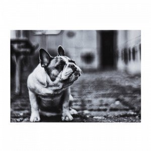 Jotex The Dog Juliste Musta 70x50 Cm