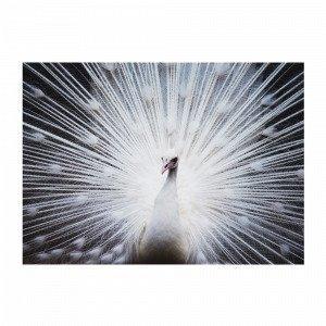 Jotex White Peacock Juliste Valkoinen 70x50 Cm